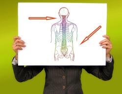 spine-body-pixa