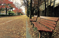 Brown Wooden Bench With Brown Dried Leaves Free Stock Photo