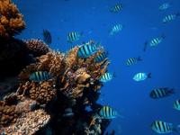 Fish swimming near reef