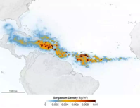 NASA satellites find biggest seaweed bloom in the world ScienceBlog com