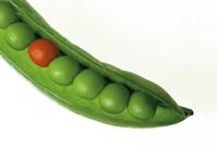 Peas Pod Pea Free photo on Pixabay