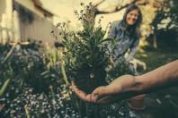 Planting Gardening Flowers Free photo on Pixabay