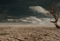 Dry earth with dead tree