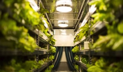 This Vertical Farm Wants To Be An Agriculture Company Not A Tech Company