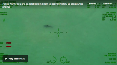 You are paddleboarding next to approximately 15 great white sharks chopper tells Calif beachgoers The Washington Post