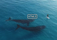 Drone captures beautiful footage of whales swimming near tiny human