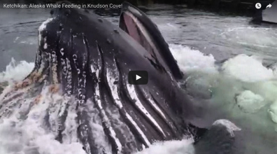 Stunning video shows humpback whale breaching surface just feet from dock
