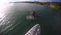 The terrifying moment an Orca nibbles at your paddle board